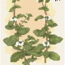 Antique Marjoram Seed Packet Pattern Chart Graph