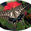 Pale Tiger Swallowtail Butterfly Cross Stitch Pattern Chart Graph