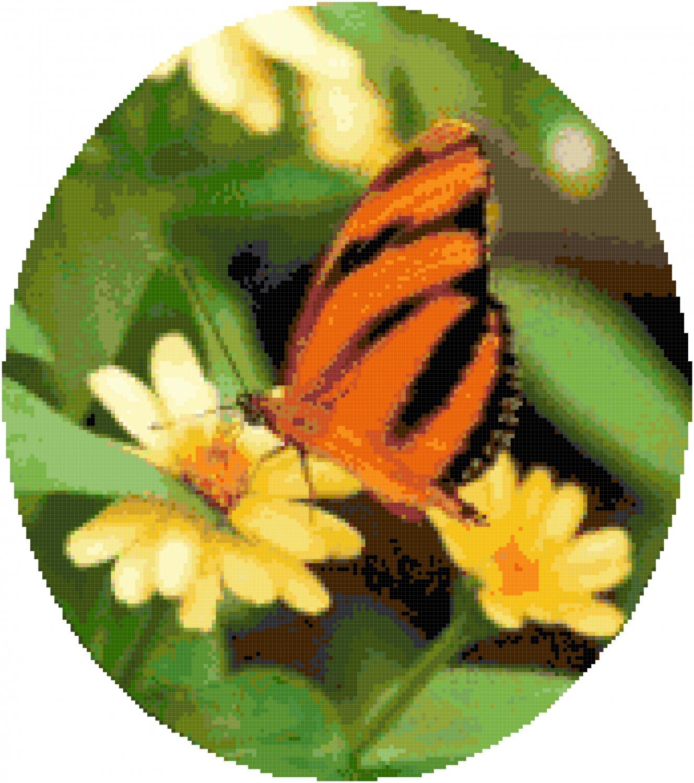 Orange Banded Butterfly Cross Stitch Pattern Chart Graph