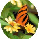 Orange Banded Butterfly Cross Stitch Pattern Chart Graph
