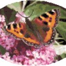 Tortoiseshell Butterfly Cross Stitch Pattern Chart Graph