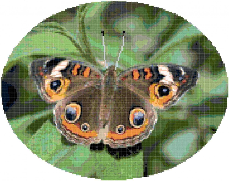 Common Buckeye Butterfly Cross Stitch Pattern Chart Graph