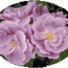 Lavender Roses Cross Stitch Pattern Chart Graph