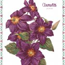 Clematis - Jackmanni Cross Stitch Pattern Chart Graph