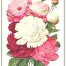 Gorgeous Peonies 1 Cross Stitch Pattern Chart Graph