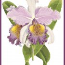 Cattleya Hardyana Orchid Cross Stitch Pattern Chart Graph