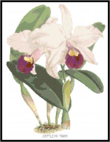 Cattleya Trian Orchid Cross Stitch Pattern Chart Graph