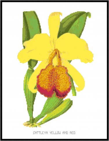 Cattleya Yellow and Red Orchid Cross Stitch Pattern Chart Graph