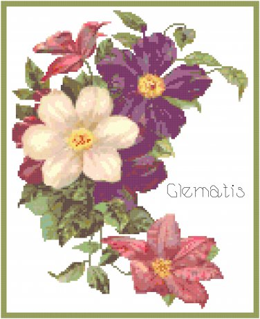 Colorful Clematis Blooms Cross Stitch Pattern Chart Graph
