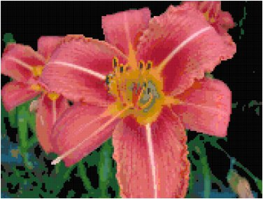 Fascination Daylily Pattern Chart Graph