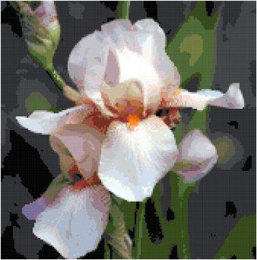 White Iris Bloom Pattern Chart Graph