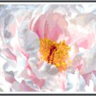Soul of a White Peony Pattern Chart Graph