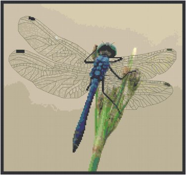 Blue Dragonfly Pattern Chart Graph