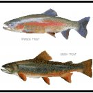 Rainbow and Brook Trout Pattern Chart Graph