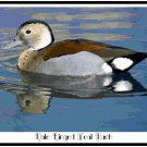 Male Ringed Teal Duck Pattern Chart Graph