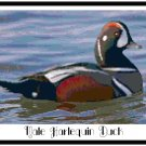 Male Harlequin Duck Pattern Chart Graph