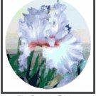 "Iris - ""Destination Fabulous"" Pattern Chart Graph"