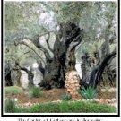 The Garden of Gethsemane Pattern Chart Graph