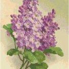 Purple Lilacs by Catherine Klein Pattern Chart Graph