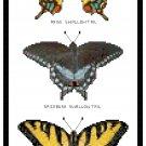 Swallowtail Butterflies Pattern Chart Graph
