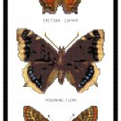 Eastern Comma, Mourning Cloak and Checkerspot Butterflies Pattern Chart Graph