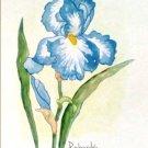 sKY BLUE IRIS HAND PAINTED WATERCOLOR PAINTING