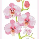 Pink Orchids by Kate Robards Pattern Chart Graph