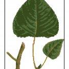 Cottonwood Leaves Botanical