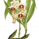 Showy Abundance Style Orchid Botanical