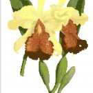 Reina del Choco  Orchid Botanical
