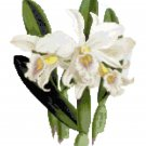 White Satin Orchid Botinical