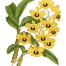Fried Egg Orchid Botanical