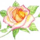 Peace Rose Cross Stitch Pattern Chart Graph