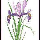 Lavender Purple Dutch Iris Pattern Chart Graph
