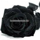 Rose seeds black rose seeds rare Amazingly Beautiful Black Rose Flower   100 seeds