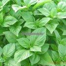 Big leaf green basil seed selling organic vegetable 100seed