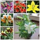 Multi Color Perfume Lily Seeds Indoor  Outdoor Mini Bonsai Plants Semillas De Plantas De Flores Lil