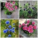 Peony Flower Seeds, Bonsai Climbing Plants Peony Tree Seeds High Quality Colorful Flower Seeds Paeo
