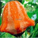 Ornamental Pumpkin Seeds Exotic Bonsai Melon Seeds Oval Squash Home Garden Decorative Rare Vegetabl