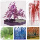 Courtyard Salix Babylonica Tree Seeds Willow Tree Mini Garden Decoration Evergreen Plant Planting S