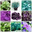 150 Mixed Flower Seeds Semilla Albahaca Basilicum Basil Seeds Bonsai Ocimum Basilicum Vegetable See