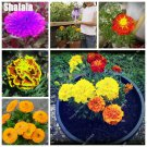 Calendula Flower Seeds Edible Flowers Seeds Impressive Bonsai Flower Perennial Garden And Indoor Bo