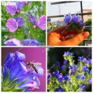 Rare Thistle Flower Seeds Echium Vulgare Plants Seeds Herb Flower Pot Balcony Ornaments Plants DIY