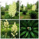 Beauty Bonsai Seeds Pteris Orchid Flower Seeds Courtyard  Patio Ornamental Plants Flower Pots Plant