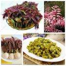 Chinese Toon Seed Home Garden Easy Grow Toona Sinensis Tree Seeds Organic Vegetable Bonsai Rare Pla