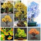Organic Ginkgo Biloba Gingko Maidenhair Tree Seeds Nut Seeds Bonsai Plant Delicious Fruit Tree Easy