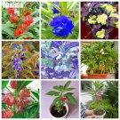 Indoor Outdoor Plants Impatiens Balsamina Flower Seeds China Most Popular Bonsai Plant Home  Garden