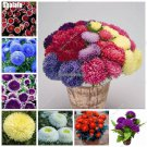 High Quality Aster Seeds Rainbow Hybrids Chrysanthemum Seeds Perennial Flowers Diy Home Garden Hous