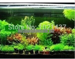 Promotion 1500 seeds 15 kinds aquarium fish tank grass seeds water Aquatic plant seed DIY Free ship