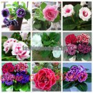 9 Colors Gloxinia Seeds Perennial Flowering Plants Sinningia Speciosa Bonsai Balcony Flower   100 P